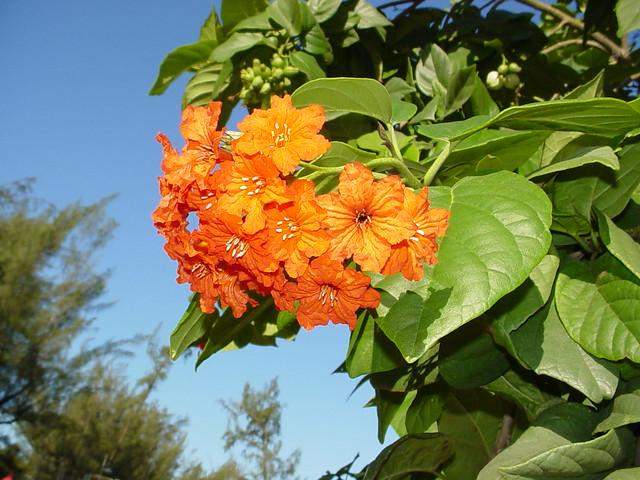 Tangerine Colored Flowers I Just Love Those Tangerine