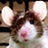 the Rodents group icon