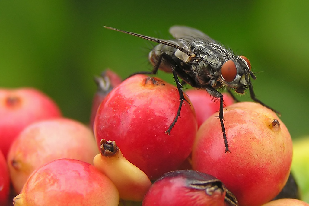 Fruity Fly