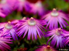 Late Afternoon Purple