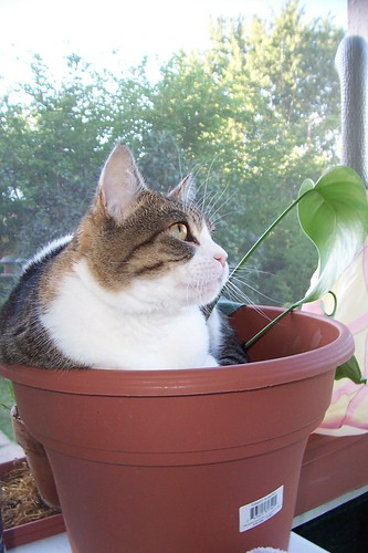 Growing Kiwi cat