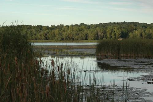 usa ny tree mendon rochester ponds