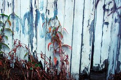 Weeds and Fence