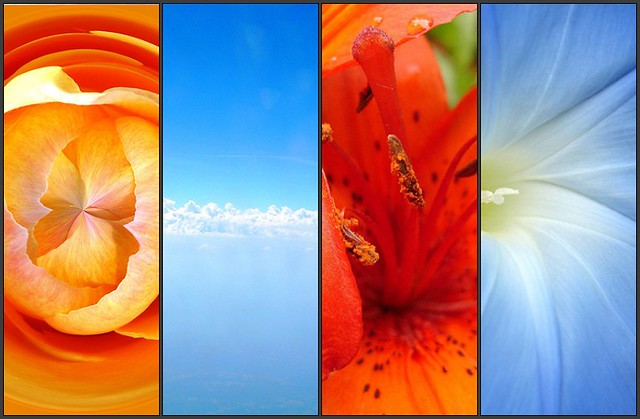 Complementary colors orange blue flickr photo sharing - What colors compliment orange ...
