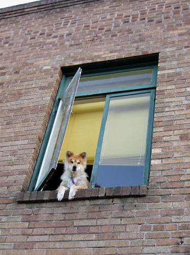Doggie in the Window by Living in Monrovia
