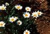 fiori3