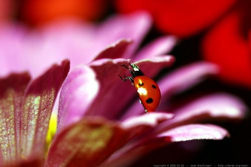 ladybug climbing up    MG 2700