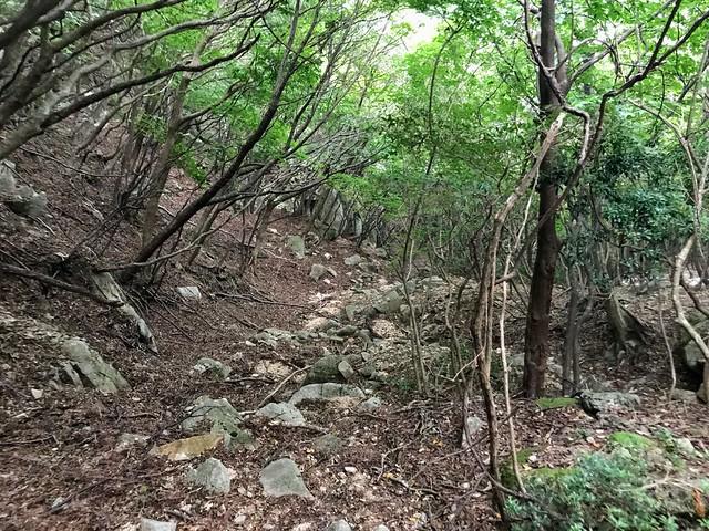 仙ヶ岳 白谷道 登山道