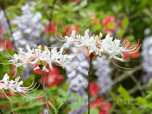 2 floral mix