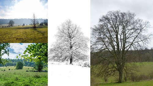 treees1