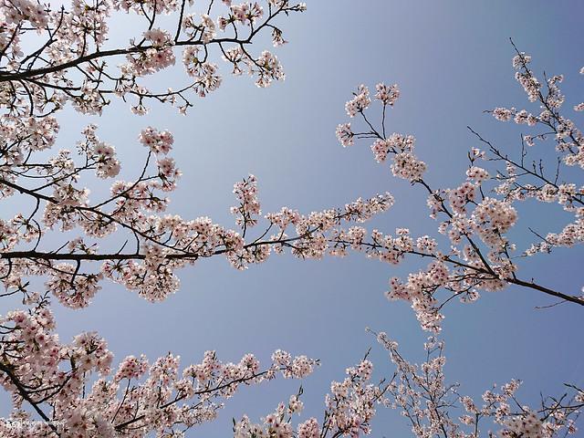 旅行若是一幅掌中的風景 | Sony Xperia XZ2 | 35