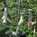 Parakeet (68) Taken through Caravan Window