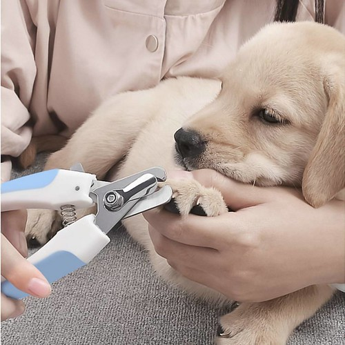 #Pet #Nail #Clippers #Claw Care #Grooming #Scissors Paw Cutter #Trimmer for #Dog or #cat get one at 👉 https://www.amazon.ca/dp/B07B7FXKLY 👈 @amazon for #canada #customers
