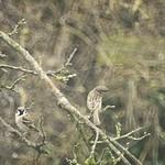 20180413-133624 Bird Garden Bokeh