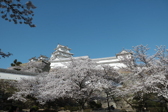 cherry blossom coller Himeji, Canon EOS KISS X8I, Canon EF-S18-55mm f/4-5.6 IS STM