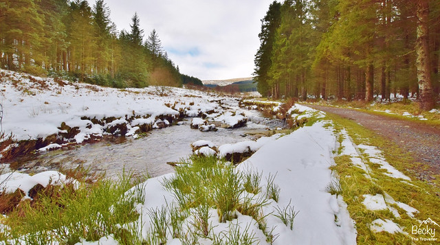 Hafren Forest Walk in Mid Wales (9)