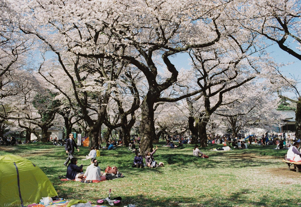 2018-03-30 小金井公園の桜 003