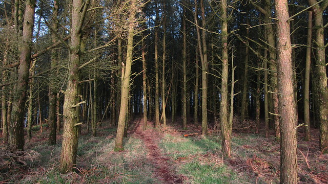 Into the woods to the east of Blackingstone Rock