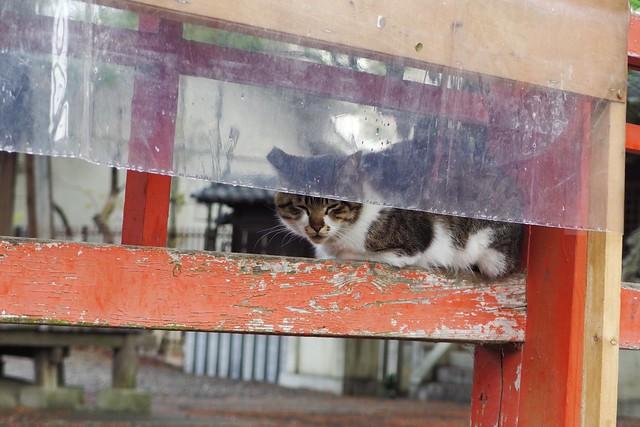 Today's Cat@2018-04-12