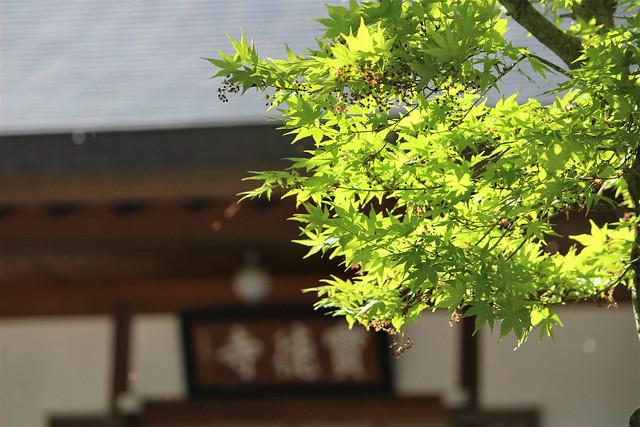 houtokuji-gosyuin04043