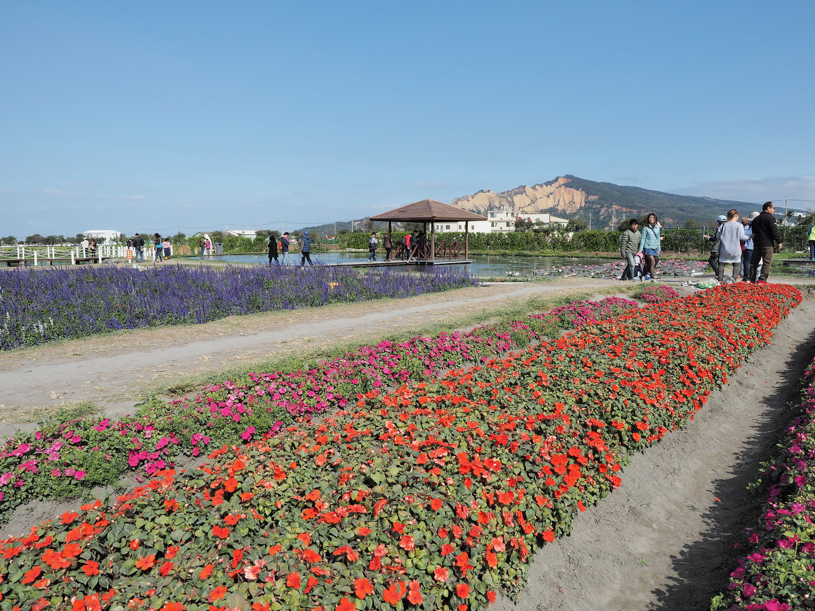 Beds of flowers with Huoyan Mountain 火焰山 in the background.