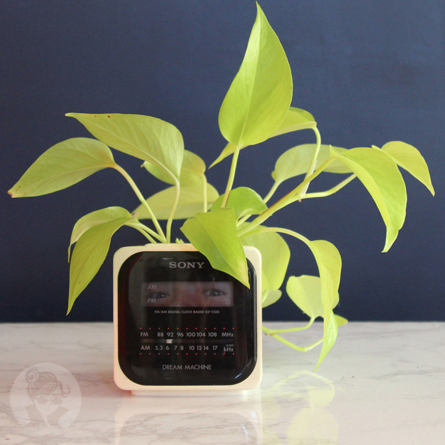Bug-in-a-planter-clock