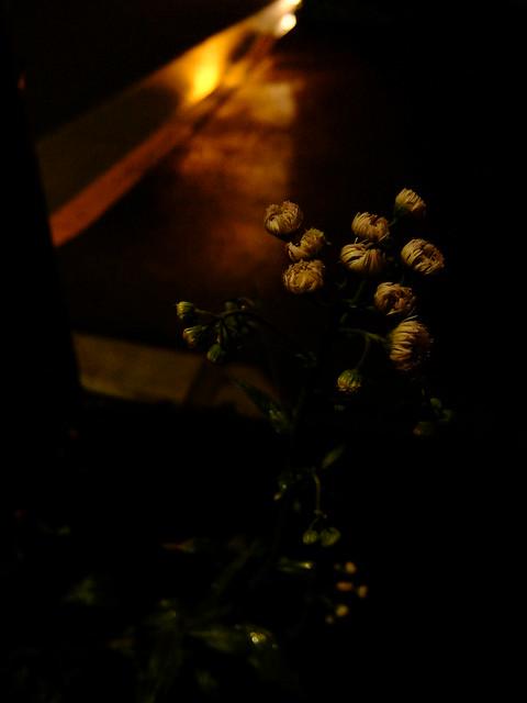 452 - wisteria2-kozo