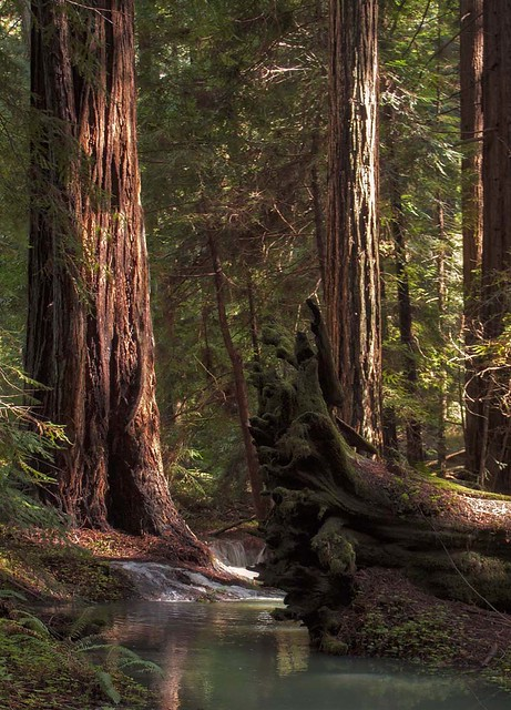 Rita Crane Photography: Redwood Forest Stream, Mendocino County