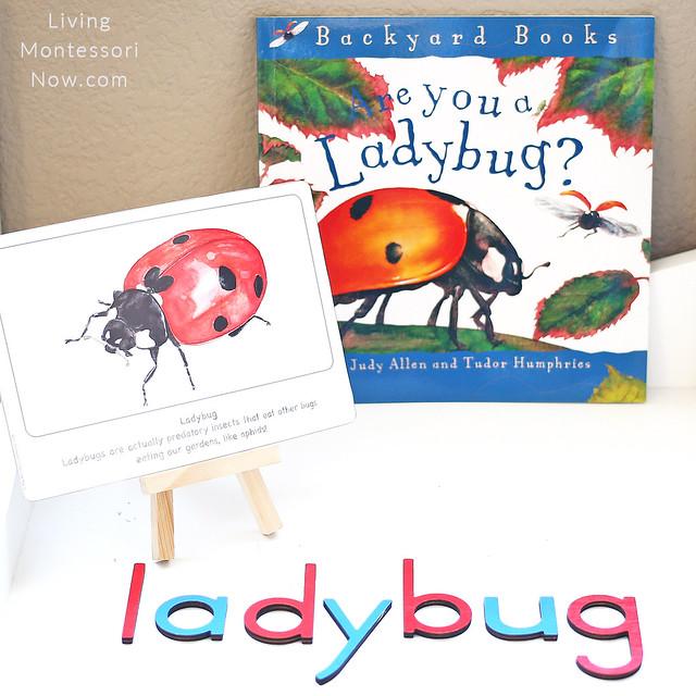 Ladybug Culture Card and Are You a Ladybug Book