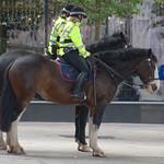 Police horses in Preston