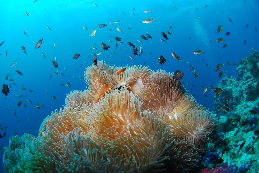 Scuba Diving corals