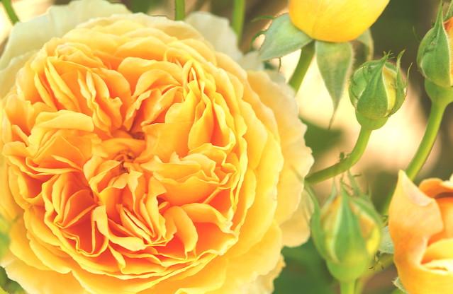 Blooming ....