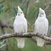 <p><a href=&quot;http://www.flickr.com/people/enyaw007/&quot;>Wayne Ellis1</a> posted a photo:</p>&#xA;&#xA;<p><a href=&quot;http://www.flickr.com/photos/enyaw007/42897456412/&quot; title=&quot;_DSC6982-2&quot;><img src=&quot;http://farm1.staticflickr.com/900/42897456412_aa774b53b3_m.jpg&quot; width=&quot;240&quot; height=&quot;159&quot; alt=&quot;_DSC6982-2&quot; /></a></p>&#xA;&#xA;