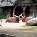 <p><a href=&quot;http://www.flickr.com/people/28703702@N08/&quot;>djsmith46</a> posted a photo:</p>&#xA;&#xA;<p><a href=&quot;http://www.flickr.com/photos/28703702@N08/42925387051/&quot; title=&quot;Berlin Zoo-26&quot;><img src=&quot;http://farm1.staticflickr.com/900/42925387051_d9e60cee3e_m.jpg&quot; width=&quot;240&quot; height=&quot;180&quot; alt=&quot;Berlin Zoo-26&quot; /></a></p>&#xA;&#xA;<p>OLYMPUS DIGITAL CAMERA</p>