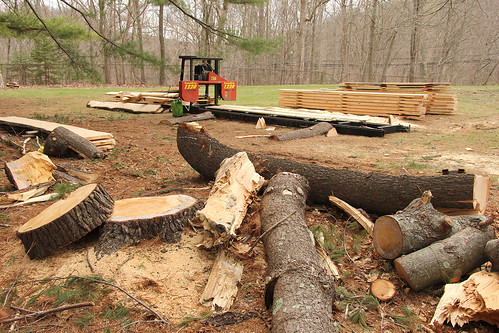 The department's portable sawmill is used to cut lumber from timber harvested from the UConn Forest.