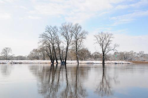 Spiegelung in der Elbe