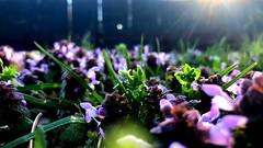 Wild Flowers in the Sun