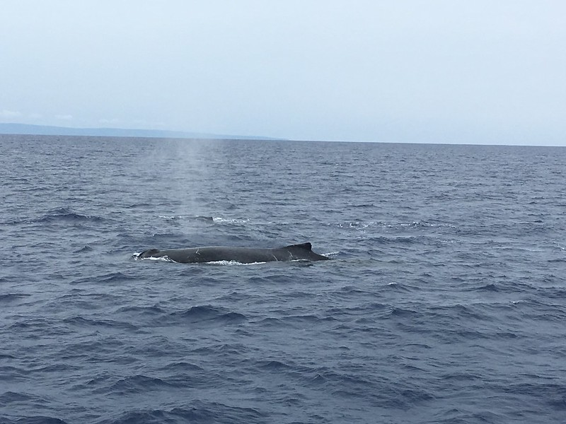 whalewatching cruise