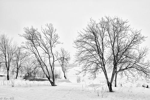 varvi beach bothnian bay raahe sea finland winter snow trees boats misty morning cloudy april rowan bw black white landscape