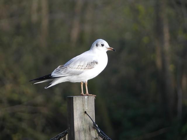 AquaZoo Friesland