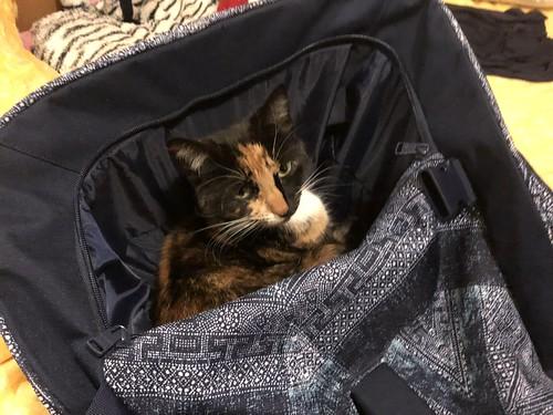 Cat stowaway