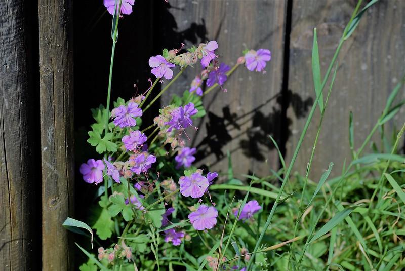 Flowers 22.05 (1)