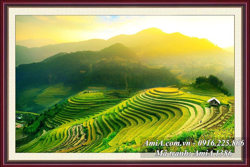 AmiA 1386 - Tranh ruộng bậc thang phong cảnh đẹp quê hương