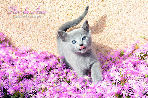 litter-N-070_nelly