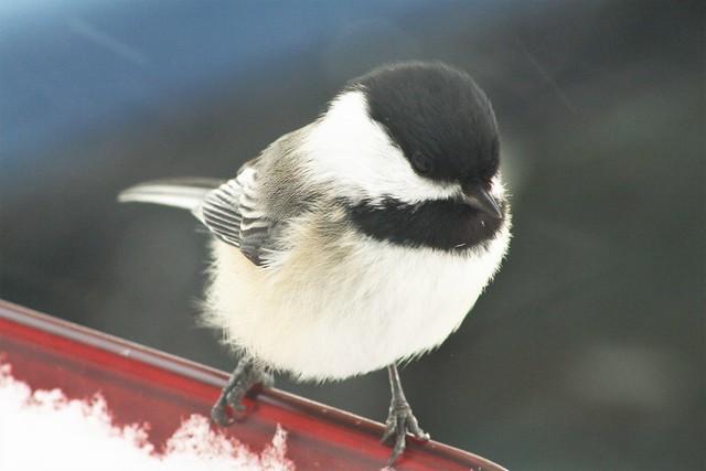 Bert's Birds