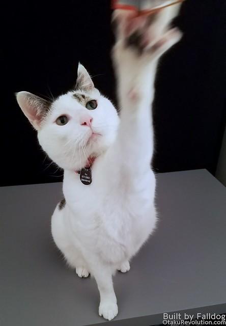 MG Cat 11