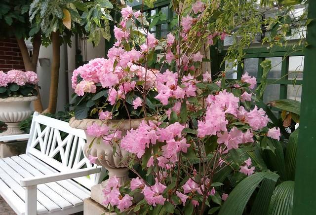 濱松花卉主題公園 (10)