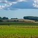 Fields outside Wingham, Kent