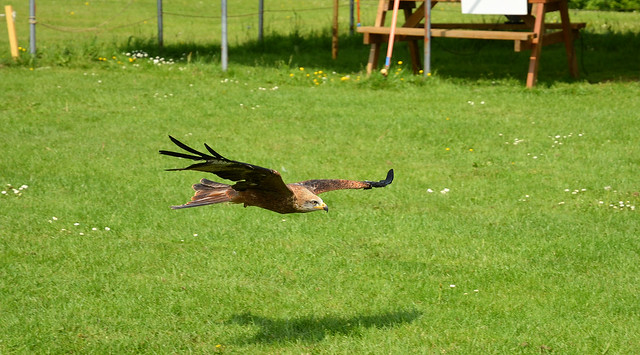 Havenstreet Falconry, Isle of Wight