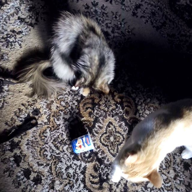 cats_and_yogurt